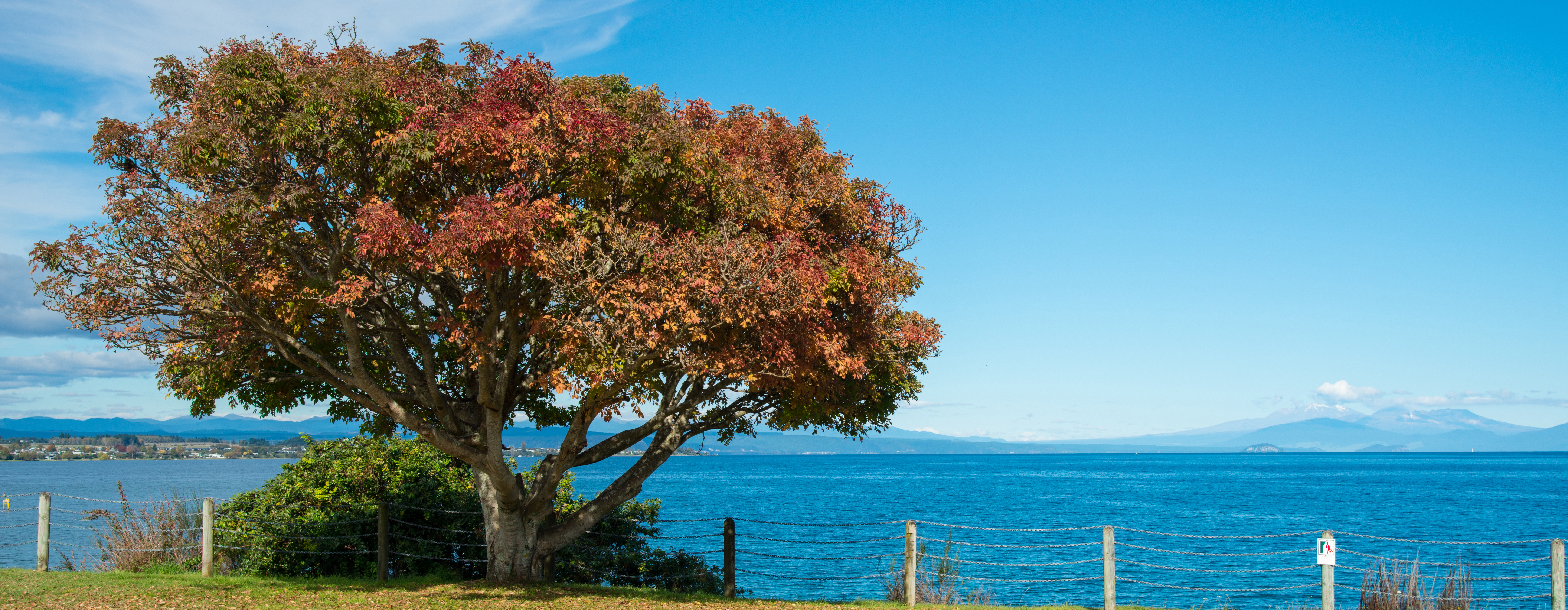 lake taupo 1800x700