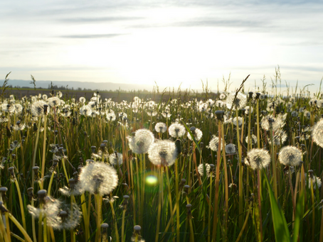Weeds and Wildflowers...Why I Do What I Do.
