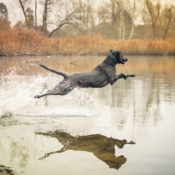 hundefotografie_karlsruhe_palomawolf