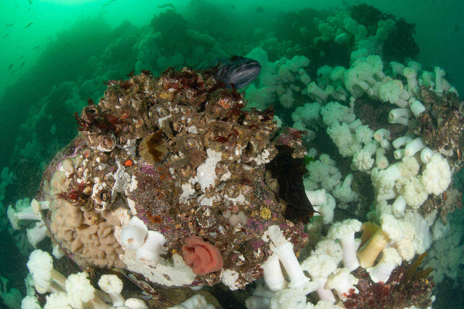 Coldwater Reef