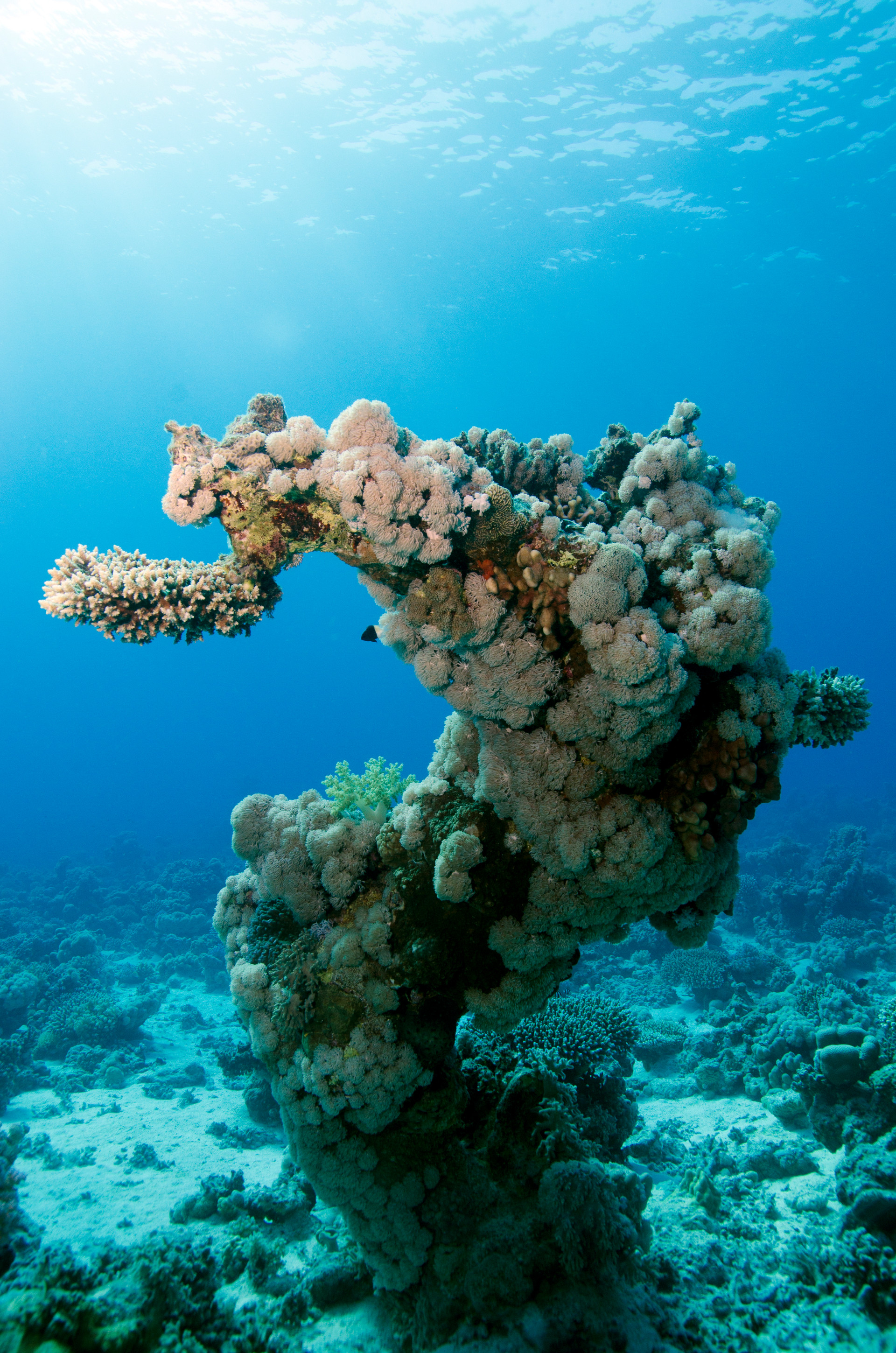 Reef Portrait