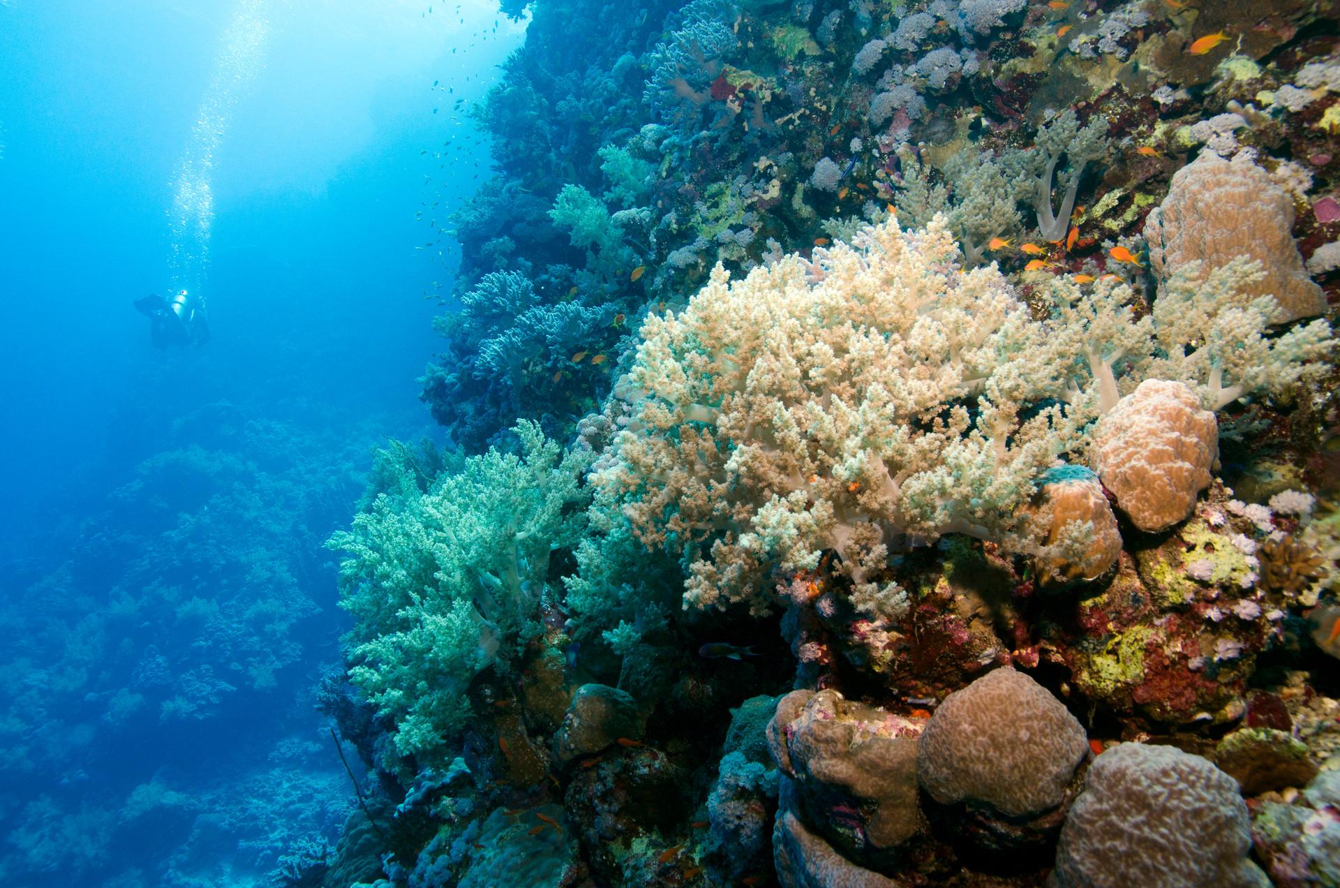Reef Landscape