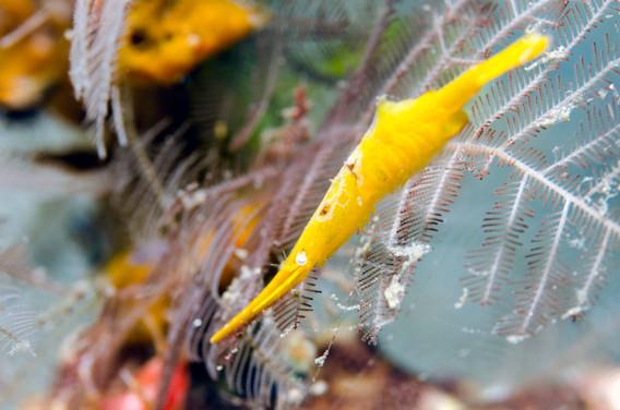 Tozeuma Shrimp