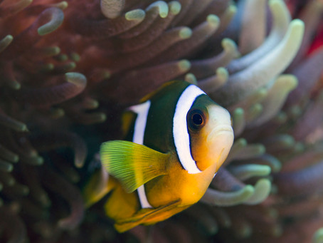 Exploring the Great Barrier Reef - Part 2