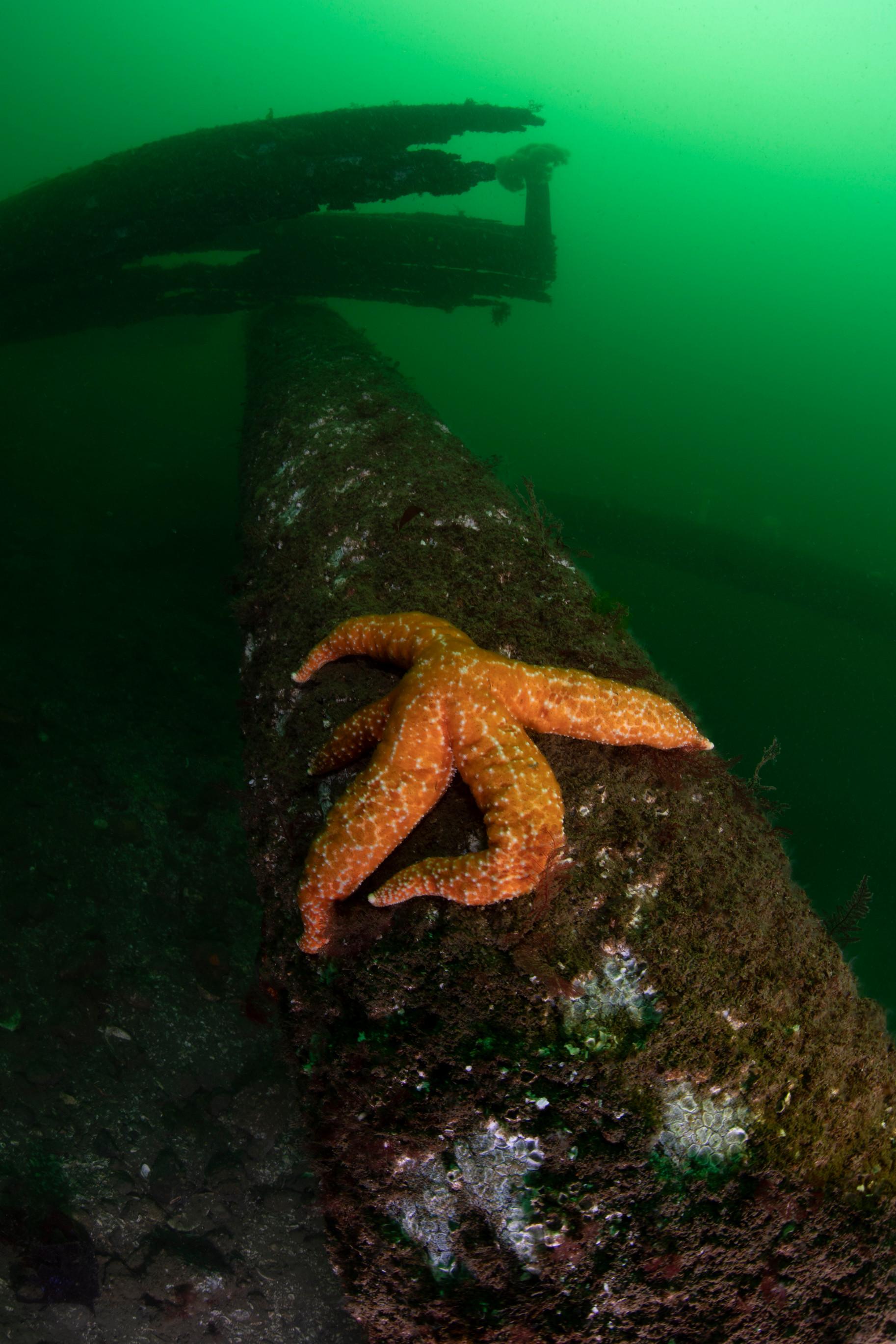 Starfish on Pilings