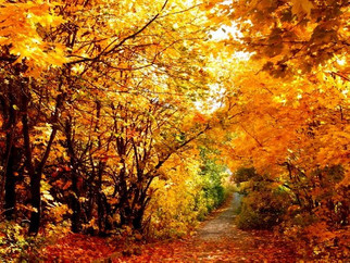 Top Tips For Running in the Fall