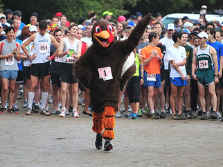 7 Fun Facts About Turkey Trots