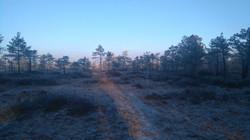 Baltic nature tours