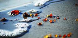 Amber sea tours