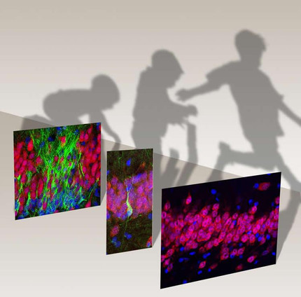 Birth of New Neurons in the Human Hippocampus Ends in Childhood