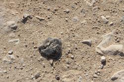 Ramon Crater 11