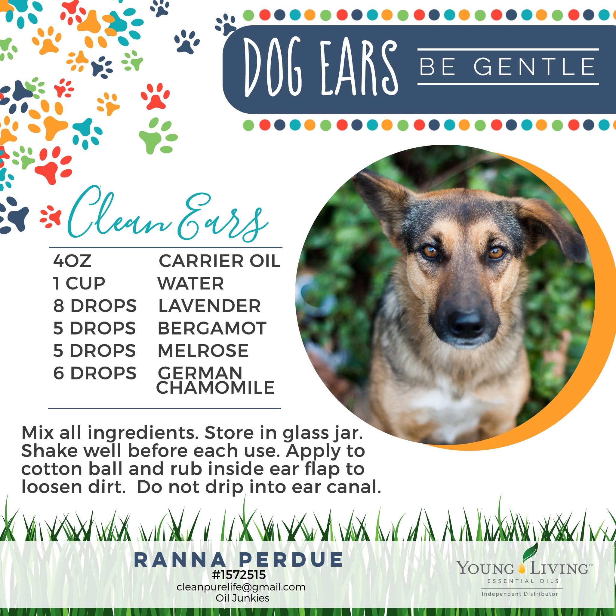28-Dogs-Clean-Ears