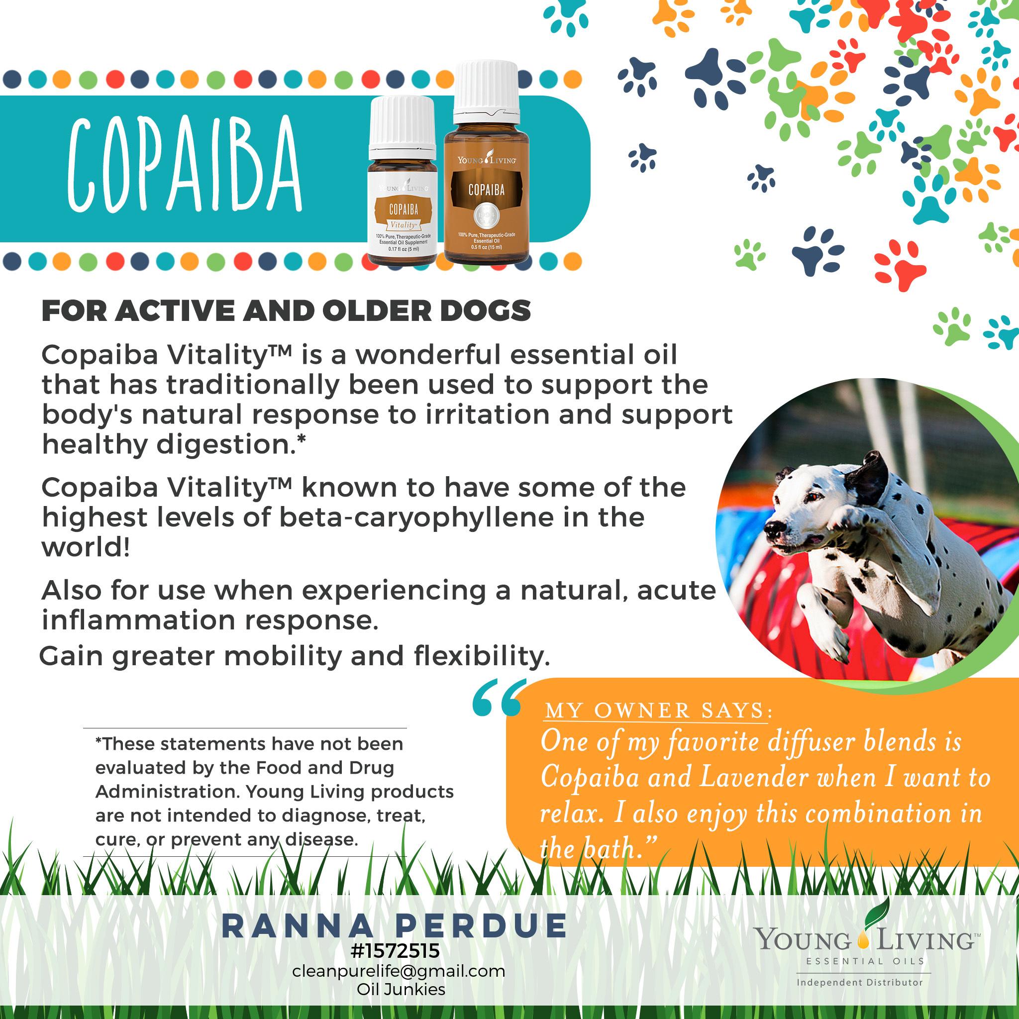 9-Dogs-Copaiba-1