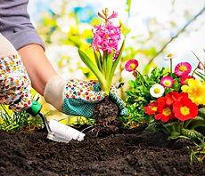 Gardening-flowers.jpg