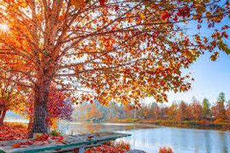 Samedi - Menu d'automne