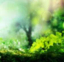 ecologie-solutions_edited.jpg