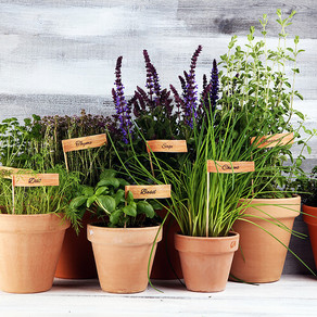 Best Herbs To Grow At Home