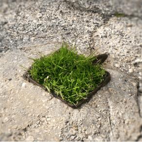 An Inspiring Patch of Green
