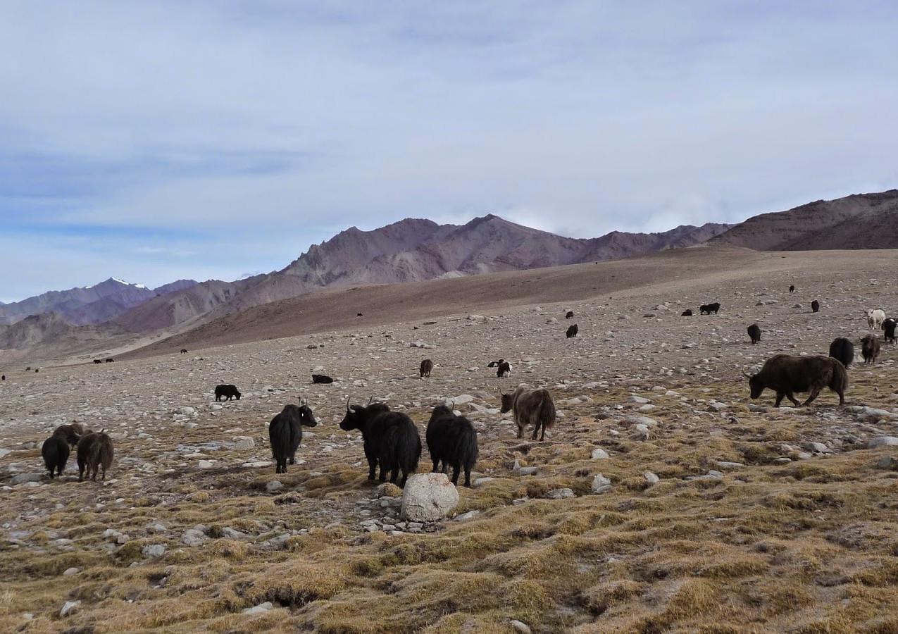 Treks-Ladakh-2015-P1120095