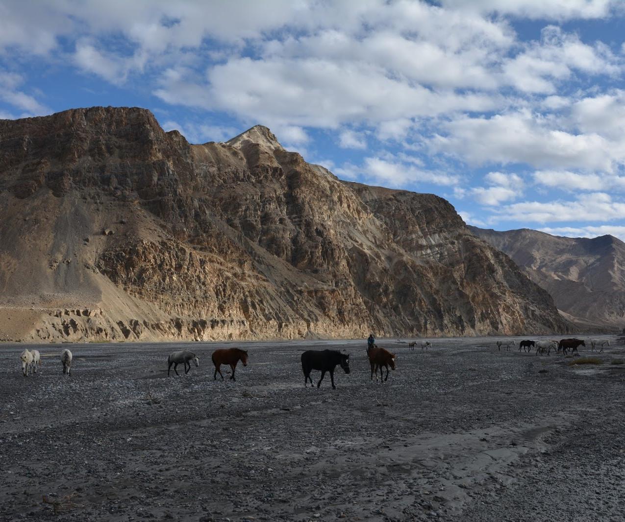 Ladakh-Spiti-2016-DSC_5778