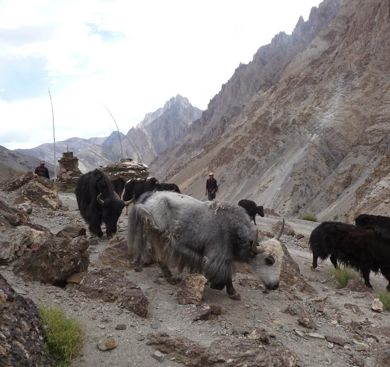 Treks-Ladakh-2015-P1110770
