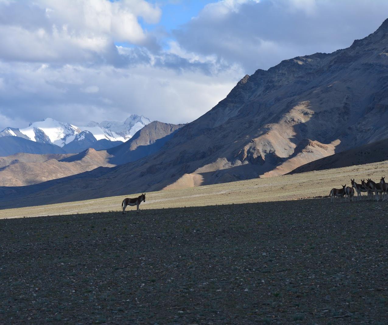 Ladakh-Spiti-2016-DSC_5692