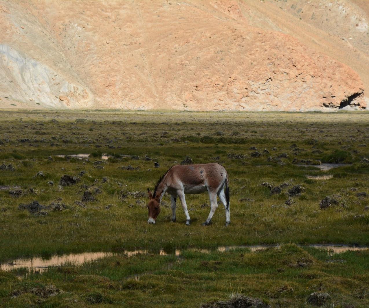 Ladakh-Spiti-2016-DSC_5723