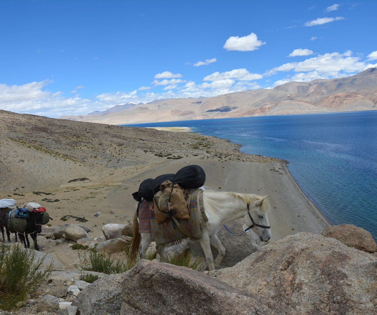 Ladakh-Spiti-2016-DSC_5681