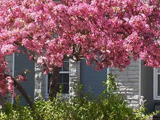 Spring Arrived in Kansas City