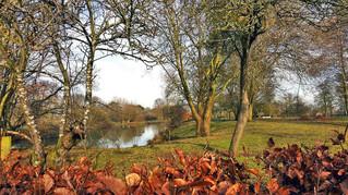 Autumn. Fish Ponds