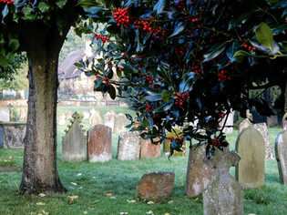 Holly berries and gravestones 2