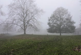 Berry Orchard in the Mist Dec 20 A