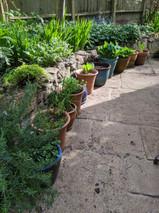 Herbs & Hostas