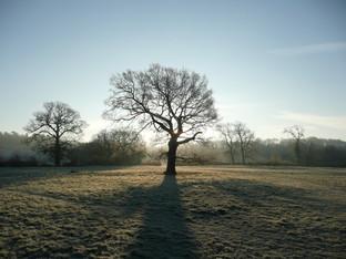 Winter sunny tree