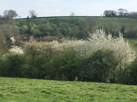 Spring - Looking from Campden Hill over to Foxcote Hill