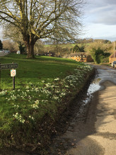 Spring & snowdrops on Upper Green