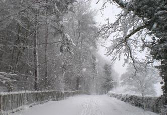 Winter. Pig Lane