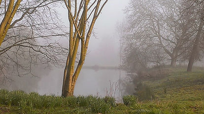 Manor ponds on a misty morning