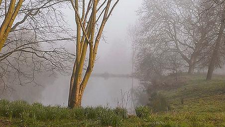 Manor ponds on a misty morning