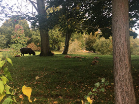 Autumn - Sheep and mushrooms in Berry Orchard
