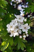 Blossom - JS2