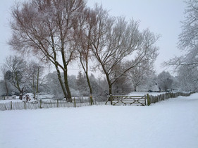 Berry orchard in the snow 2