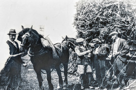 Fred Sabin with horse, building bonfire for unknown celebration