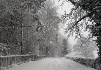 Pig lane in snow