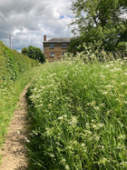 Spring - View towards Middle Street - Cow parsley