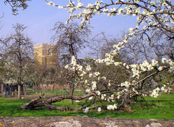 Spring. Church from Back St