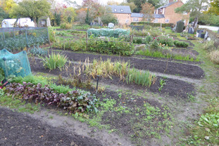 Allotments at the Crowyard, Front St. in autumn - A