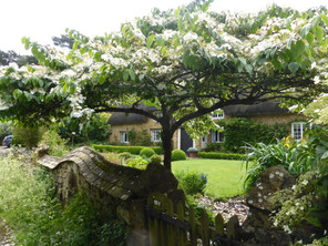 Thatched cottage blossom