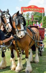 Dray horses 1