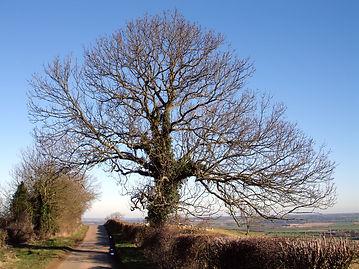 Winter tree on Foxcote Hill